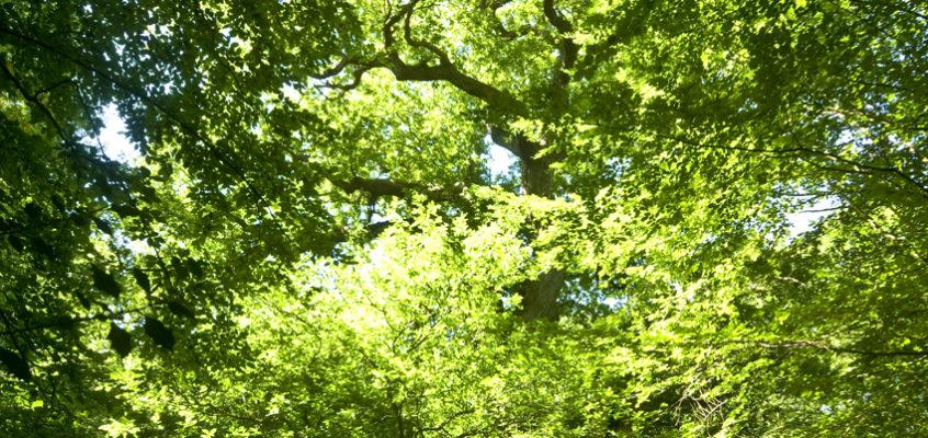 Ein Spaziergang im Urwald  bei Hude