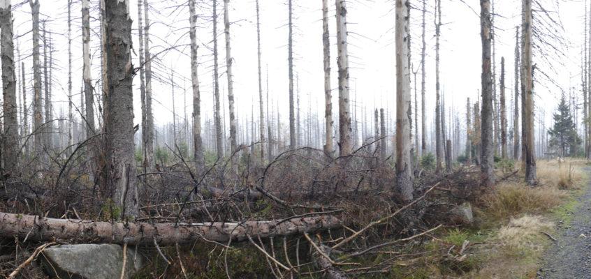 Der Harz stirbt